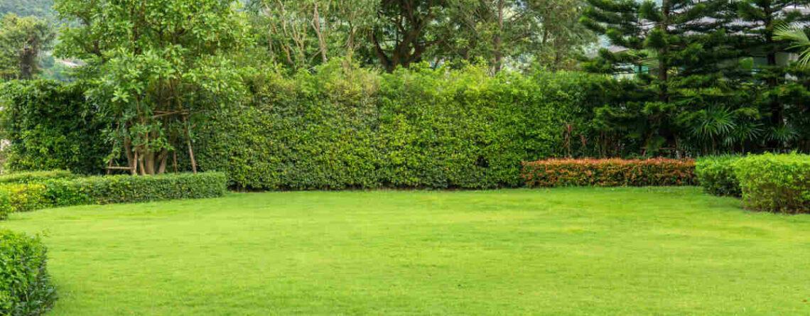 Bonus Verde 2021: come funziona e come richiedere il bonus giardini